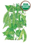 Bean Bush Baby Lima Henderson Organic HEIRLOOM Seeds