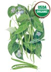 Bean Bush Contender Organic HEIRLOOM Seeds