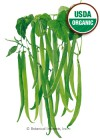 Bean Bush Filet Tavera Organic Seeds